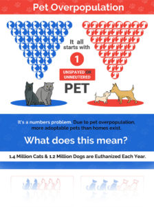 SNAP Spay and Neuter Action Project | Pet Overpopulation Statistics | No-Kill